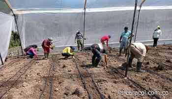 Granjas demostrativas para capacitar a campesinos en Suratá - Caracol Radio