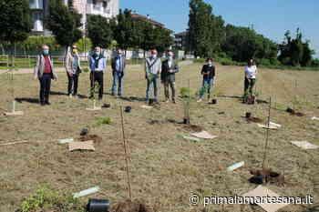 """Con Forestami 1.500 piante in più a Melzo. Nasce la nuova """"Tangenziale verde"""" - Prima la Martesana"""