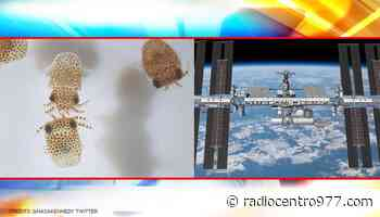 La NASA lanzará crías de calamar y 'osos de agua' a la ISS en la próxima misión SpaceX - Grupo Radio Centro
