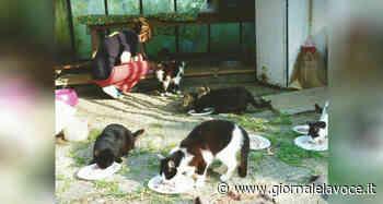 TRINO VERCELLESE. L'associazione A-Mici acquista una casa in cui curare e ospitare i gatti della città - giornalelavoce