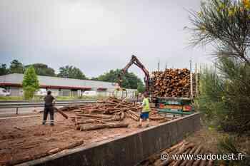 Saint-Pierre-du-Mont (40) : un poids lourd perd 20 tonnes de sa cargaison de bois - Sud Ouest