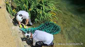 Champigny-sur-Marne : un filet anti-déchets pour lutter contre la pollution de la Marne - Le Parisien