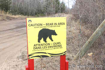 Bear, cub spotted in Hay River - Northern News Services