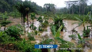 Erosión costera e inundaciones amenazan el Bajo Baudó chocoano - El Tiempo