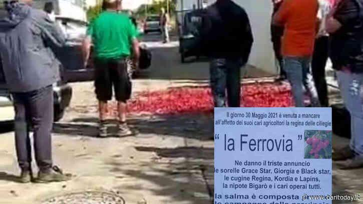 Manifesti funebri per annunciare la 'morte' della ciliegia ferrovia: a Casamassima produttori in protesta per il calo prezzi - BariToday