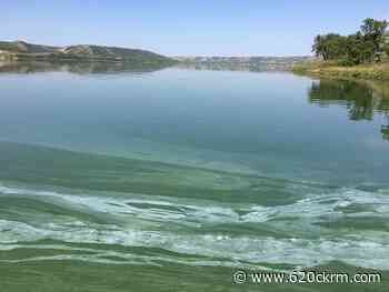 Blue-green algae bloom in Qu'Appelle Valley becoming more and more prevalent - 620 CKRM.com
