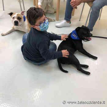 Partinico, nasce centro specializzato per interventi assistiti con gli animali (VIDEO) - Tele Occidente