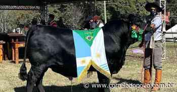 Expoutono de Uruguaiana consagra animais das raças Angus e Brangus - Jornal Correio do Povo