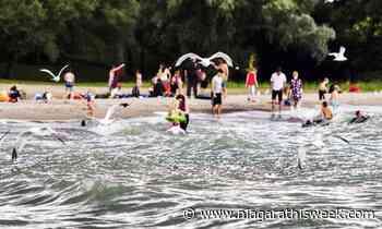 News Wainfleet hopes to better control beach problems this summer - Niagarathisweek.com