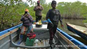Mujeres del manglar, el esfuerzo por sobrevivir en San Luis La Herradura - elsalvador.com