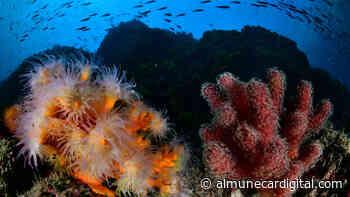 Los fondos marinos de La Herradura son protagonistas durante el fin se semana - Almuñécar Digital