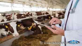 CIDASC monitora casos de brucelose e tuberculose em Capinzal e Ouro - Rádio Capinzal