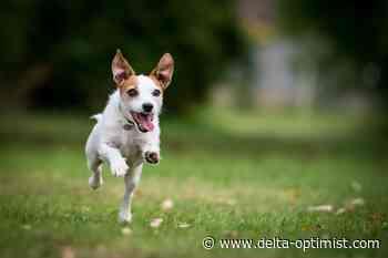 Letters: Off-leash dog park needed in Ladner - Delta-Optimist