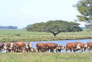 Cavalos e vacas são furtados em Dom Pedrito e Lavras do Sul - Qwerty Portal