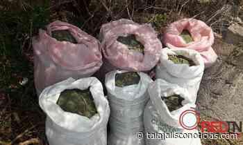 Localizan 85 kilos de marihuana en San Juanito de Escobedo, Jalisco. « REDTNJalisco - Tala Jalisco Noticias