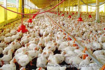 Mercado Aurora inicia quarta-feira (19) o abate nas unidades avícolas de Tapejara A retomada das - Avicultura Industrial