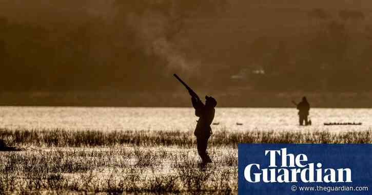 Fowl play: duck hunting struggles to stay afloat in Victoria