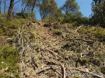 """""""Massacre à la tronçonneuse"""" dans le massif forestier de Salon-de-Provence. - Maritima.Info - Maritima.info"""