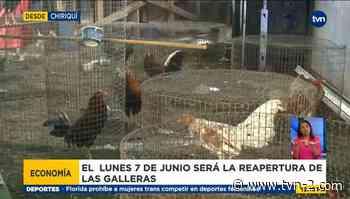 Dueños de galleras en Chiriquí están preparados para reactivarse - TVN Noticias