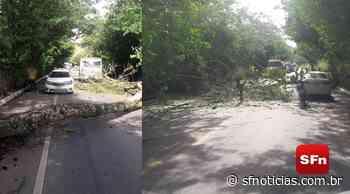 Árvore cai na RJ-116 em Cordeiro; concessionária diz que um carro foi atingido - SF Notícias