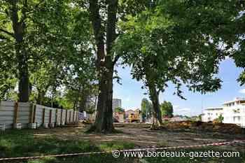 Massacre de platanes à Talence, que fait la Métropole ? - Bordeaux Gazette