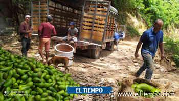 Bloqueos viales en el Cesar tienen en jaque a campesinos - El Tiempo