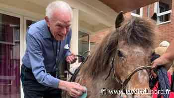 Neuville-en-Ferrain: à l'Ehpad la fleur de l'âge, des poneys pour le bien-être des résidents - La Voix du Nord