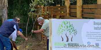 Em Ubatuba (SP), árvores são plantadas em memória das vítimas da covid-19 - Jornal Costa Norte