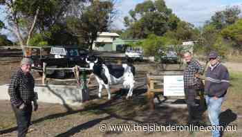 Cow and well join restored trough at Haney Park - The Islander