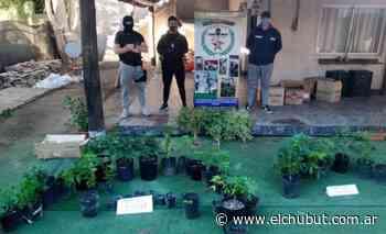 La policía desarticuló un kiosco de marihuana en Puerto Madryn - Diario EL CHUBUT