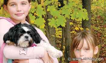 'Now my little girls are without their best friend': Innisfil woman says firework fright caused dog's death - simcoe.com