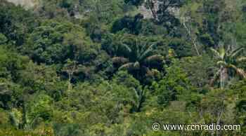 Crearán zona de reserva que conectará con Chiribiquete y La Macarena en la Amazonia - RCN Radio