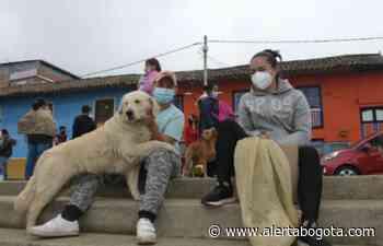 Perros y gatos del municipio de Chipaque, Cundinamarca, tendrán 'cédula' - Alerta Bogotá