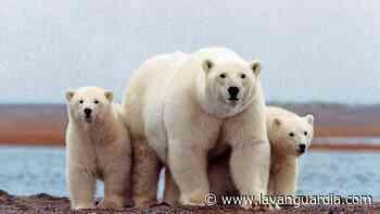 El santuario del Ártico, salvado - La Vanguardia