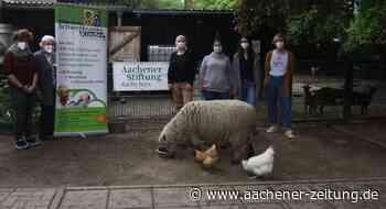 Willi-Fährmann-Schule Eschweiler: Tierprojekt vor dem Aus retten - Aachener Zeitung