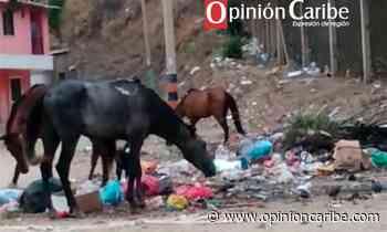 Comunidad del barrio Santa Ana, denuncia problemática ambiental - Opinion Caribe