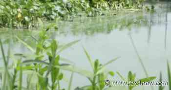 Blue-green algae bloom alert for Orange River - Manatee Park - Fox 4