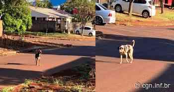 Moradora do Santos Dumont pede ajuda para resgatar cães agressivos abandonados por antigo dono - CGN