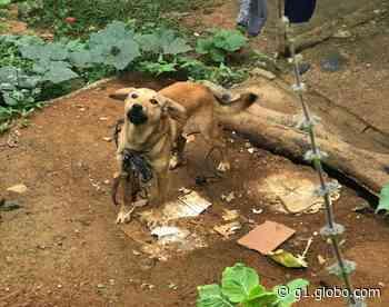 Polícia Civil resgata cães em situação de maus-tratos em Santos Dumont - G1
