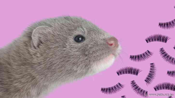 Great News for Minks! Klepki Cosmetics Ditches Fur Eyelashes