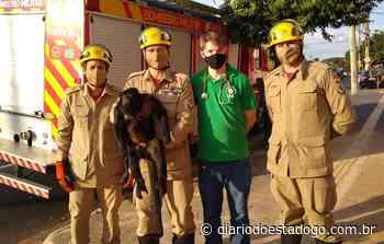 Macaco guariba é capturado em rua do Setor Sul, em Goiânia - Diário do Estado