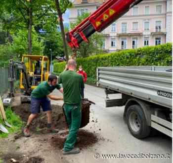 Merano, messi a dimora 130 nuovi alberi in città - La Voce di Bolzano