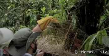 Área Metropolitana liberó 38 animales en la reserva el Romeral de Sabaneta - Telemedellín