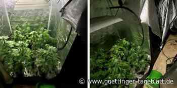 Polizei durchsucht Wohnung in Uslar und findet 100 Cannabispflanzen - Göttinger Tageblatt