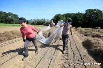 Tarnos : à la ferme solidaire, ils cultivent des jours meilleurs - Sud Ouest