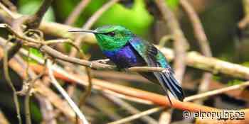Huánuco: protegerán decenas de especies y miles de hectáreas de bosques en Codo de Pozuzo - ElPopular.pe