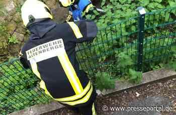 FW Altenberge: Feuerwehr eilt Wasserhuhn Küken zur Hilfe - Presseportal.de
