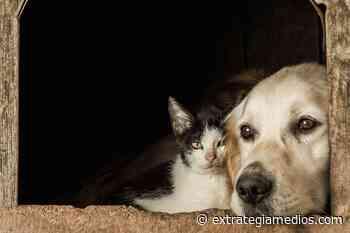 En Zipaquirá se vacunarán a los caninos y felinos contra la rabia, puerta a puerta - Extrategia Medios