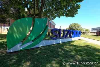 Suzano (SUBZ3) lidera baixas do Ibovespa em maio; confira as 5 maiores quedas - Suno Notícias