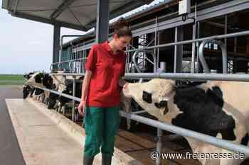 Vier-Sterne-Herberge für junge Kühe im Vogtland ausgezeichnet - Freie Presse